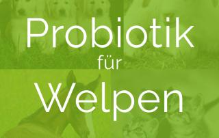 20190531-Probiotik-fuer-Welpen-NutraPro_tiny