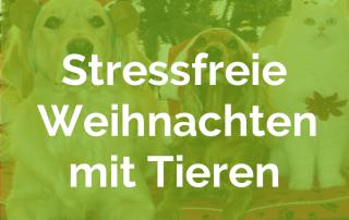 20191213108-Stressfreie-Weihnachten-mit-Tieren-BLOG